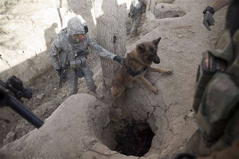 Dogs of War: The Bomb-Sniffing K9s Still at Work in the