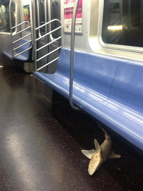 """6 Animal """"Commuters"""": Subway Sharks, More"""