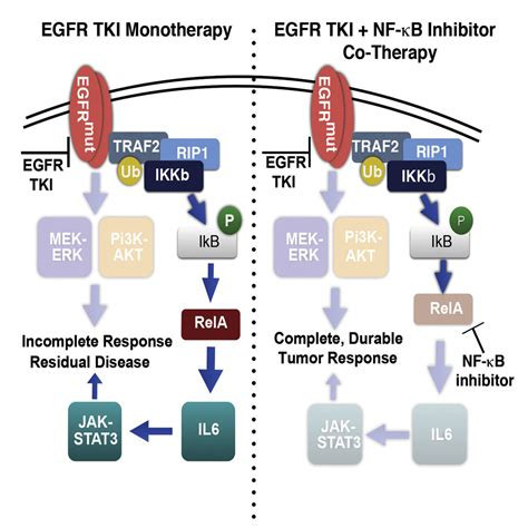 NF-κB-Activating Complex Engaged in Response to EGFR